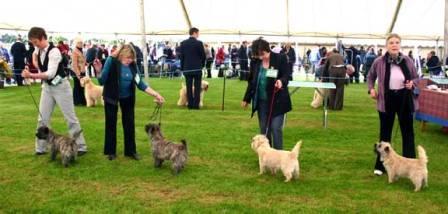 May  Dog Show Ingliston