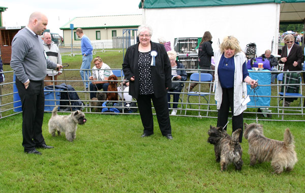 Championship show cairn terrier 2014 for Rcc home show