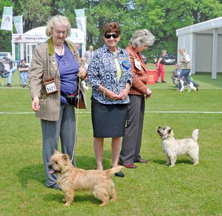 Championship Show Cairn Terrier 2016